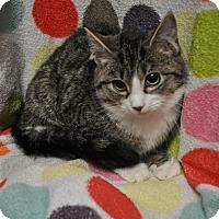 Adopt A Pet :: Tomato - Rockaway, NJ
