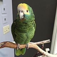Adopt A Pet :: Leroy - Lenexa, KS
