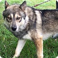 Adopt A Pet :: Wolfie - Zanesville, OH