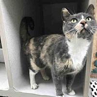 Adopt A Pet :: SODA POP - Canfield, OH