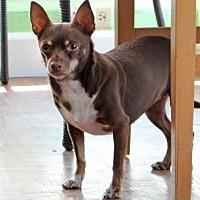 Adopt A Pet :: Coco - Santa Paula, CA
