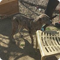 Adopt A Pet :: Kathy - Gadsden, AL