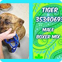 Adopt A Pet :: TIGER - Kenansville, NC