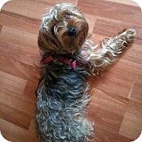 Adopt A Pet :: Sookie - Riverview, FL