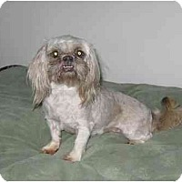 Adopt A Pet :: Missy - Chandler, IN