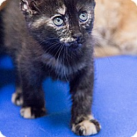 Adopt A Pet :: Mulberry - Chicago, IL