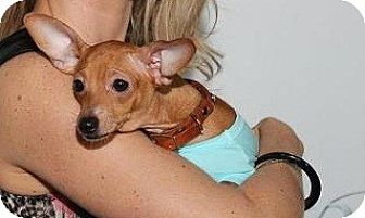 Dachshund Mix Dog for adoption in Miami, Florida - Maryjo