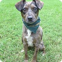 Adopt A Pet :: Speckles - Mocksville, NC