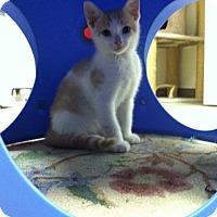 Adopt A Pet :: Max - Trevose, PA