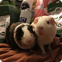 Adopt A Pet :: Harper Lee and Rose - Fullerton, CA