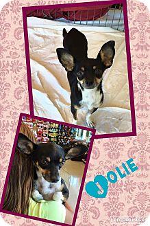 Chihuahua/Rat Terrier Mix Dog for adoption in Scottsdale, Arizona - Jolie