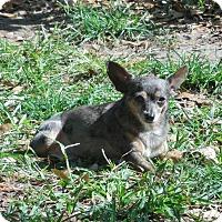 Adopt A Pet :: Hoppy - Ormond Beach, FL