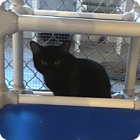 Adopt A Pet :: Castle - Geneseo, IL
