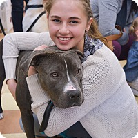 Adopt A Pet :: Mowgli - Ogden, UT