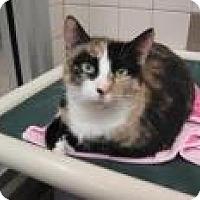 Adopt A Pet :: Riley 4517 - Columbus, GA