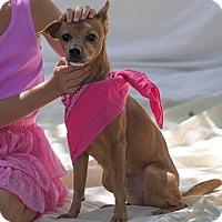 Adopt A Pet :: Donna - Santa Barbara, CA