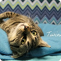 Adopt A Pet :: Twinkle - Melbourne, KY