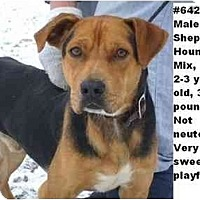 Adopt A Pet :: # 642-10 - ADOPTED! - Zanesville, OH