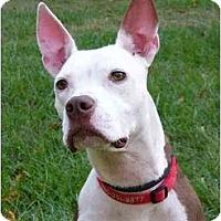 Adopt A Pet :: Tessa - Mocksville, NC