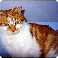 Adopt A Pet :: Sally - Medway, MA