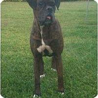 Adopt A Pet :: Kona - Lake Forest, CA