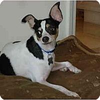 Adopt A Pet :: Poker - West New York, NJ