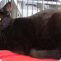 Adopt A Pet :: Spunky - Seminole, FL
