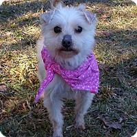 Adopt A Pet :: Madeline - Mocksville, NC