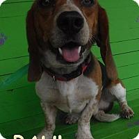 Adopt A Pet :: Paul - Batesville, AR