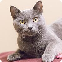 Adopt A Pet :: Stasia - Chicago, IL