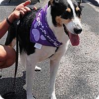 Adopt A Pet :: Batista - Corbin, KY