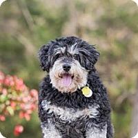 Adopt A Pet :: Bosley - Dallas, TX
