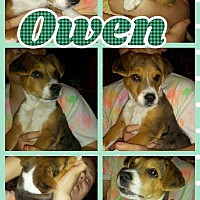 Adopt A Pet :: Owen - Shaw AFB, SC