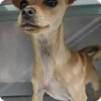 Adopt A Pet :: Muneka - California City, CA