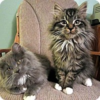 Adopt A Pet :: Abbott & Atlas - Arlington, VA