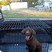 Adopt A Pet :: Oakley - Windsor, MO