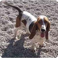 Adopt A Pet :: Aggie - Albuquerque, NM