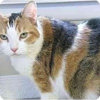 Adopt A Pet :: Claire - Markham, ON