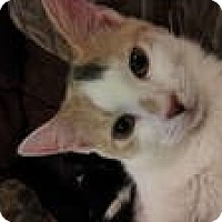 Adopt A Pet :: Skittles - Clearfield, UT