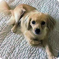 Adopt A Pet :: Penelope - Sugarland, TX