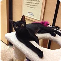 Adopt A Pet :: Black Pearl - Scottsdale, AZ
