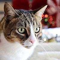 Adopt A Pet :: Rudy - Palmdale, CA