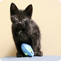 Adopt A Pet :: Elfie - Chicago, IL