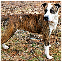 Adopt A Pet :: Lacey - Forked River, NJ