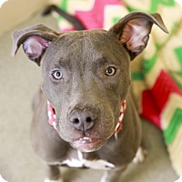 Adopt A Pet :: Winona - Kettering, OH