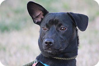 Dachshund Mix Dog for adoption in Glastonbury, Connecticut - Pistol ~ ADOPTED!