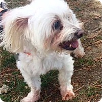 Adopt A Pet :: Snowball - Memphis, TN