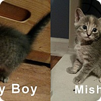 Adopt A Pet :: Misha and her brothers - Jacksonville, FL