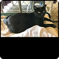 Adopt A Pet :: Magic - Fallbrook, CA