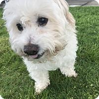 Adopt A Pet :: KENNY - Los Angeles, CA